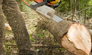 Tree Service in Waltham MA Tree Service Estimates in Waltham MA Tree Service Quotes in Waltham MA Tree Service Professionals in Waltham MA