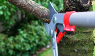 Tree Pruning Services in Waltham MA