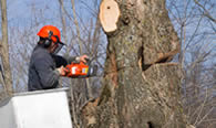 Tree Removal in Waltham MA